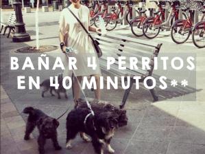 NC_Perritos